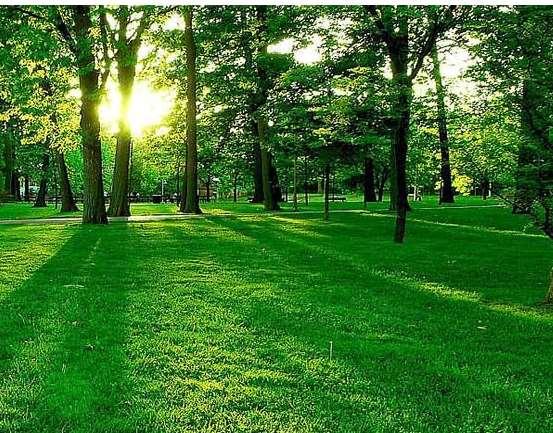 园林绿化需要掌握的一些知识