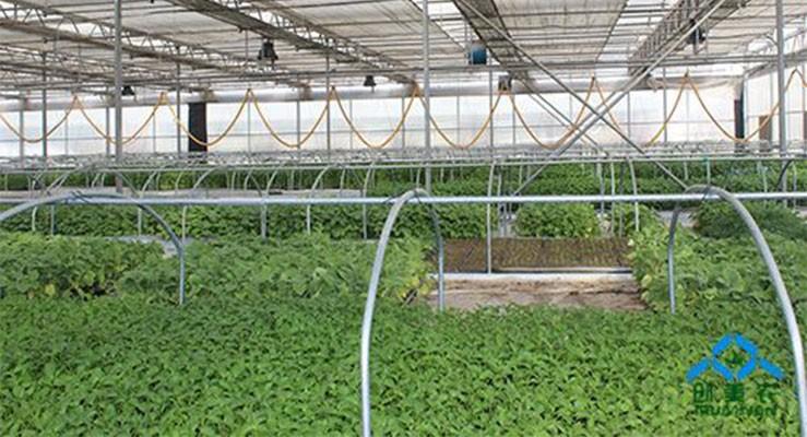 智能连栋温室作物