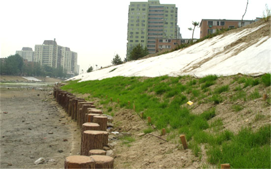 河道护坡木桩厂家