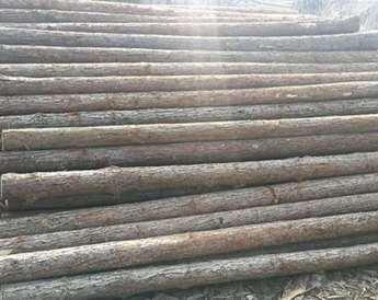 有哪些因素影响杉木桩价格