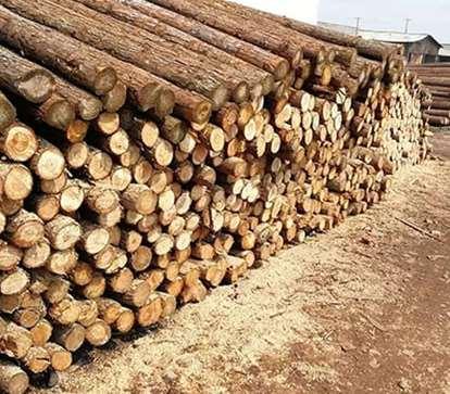 有问题的杉木桩会带来的影响