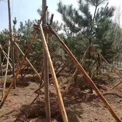 石嘴山园林绿化树木支撑杆供应商