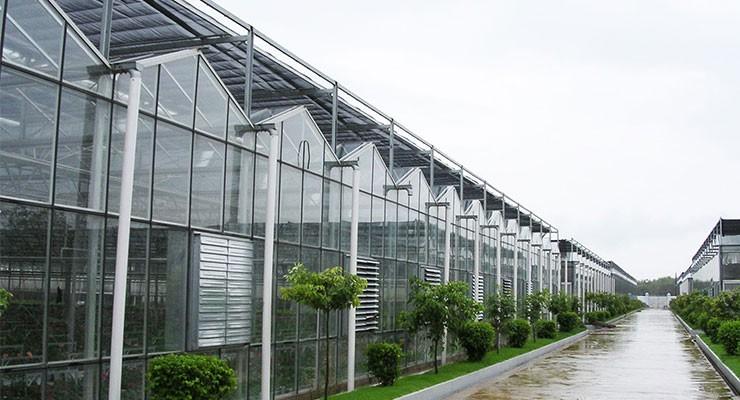 2019新型玻璃花卉温室大棚