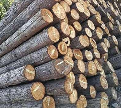 木桩生态驳岸的相关说明
