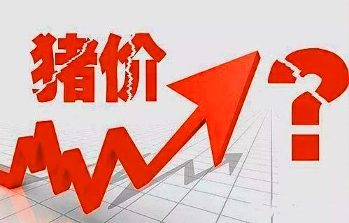 敲黑板!中国生猪养殖现状及趋势分析