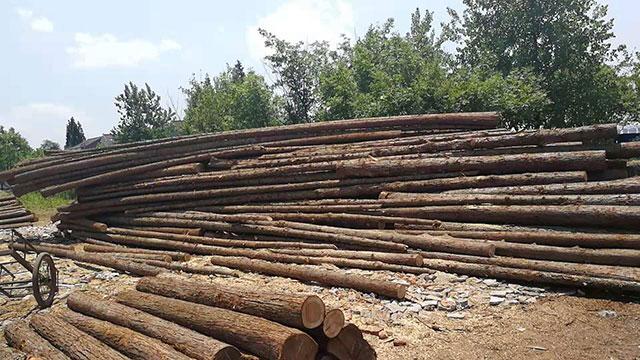杉原木价格