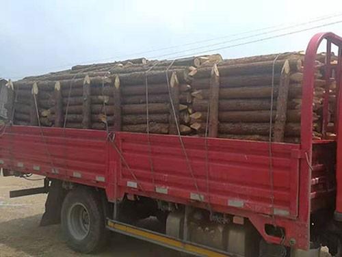 木桩多少钱