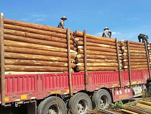影响杉木桩价格的因素介绍