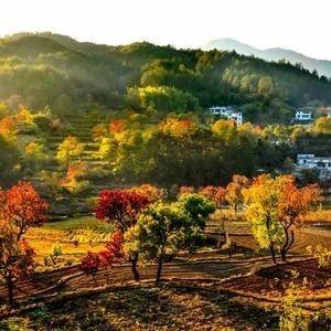 湖北省成立第六届林木品种审定委员会
