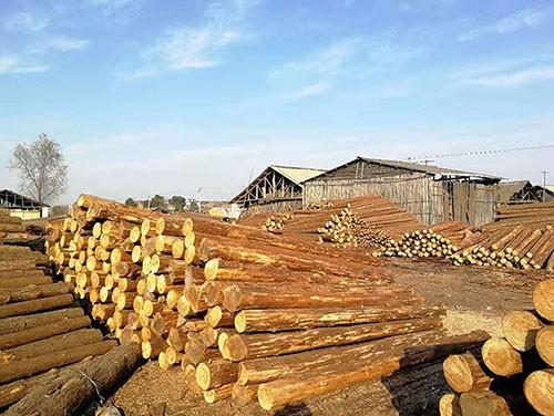 护坡木桩加工厂
