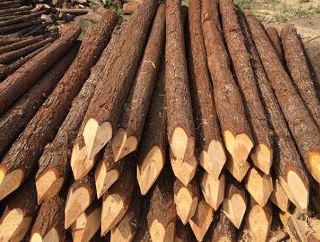 杉木桩的木材热处理工艺