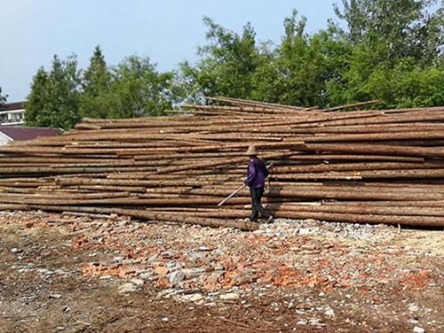 防汛杉木桩的建立控制事项