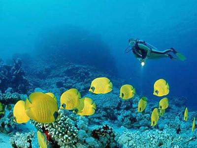 福州海洋生物检测