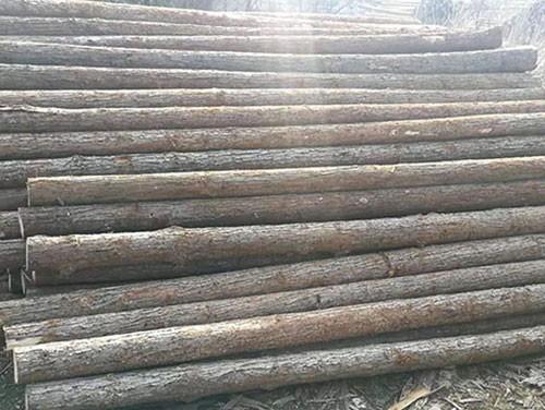 杉木桩加工厂