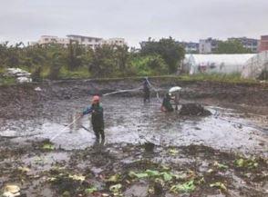 二十年没有池塘清淤如何