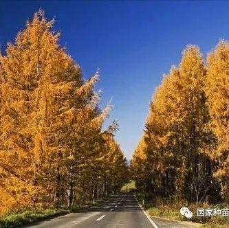 """林业行业标准""""日本落叶松纸浆林定向培育技术规程"""" 获宜昌市标准创新奖"""