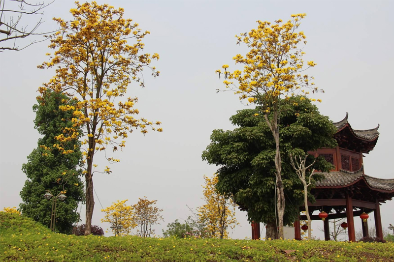 高温季节,怎样进行苗木防护,降低养护成本