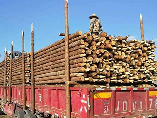 杉木桩涨价的决定性因素究竟是什么?