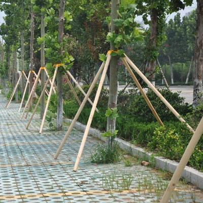 树木支撑架应该怎样保存