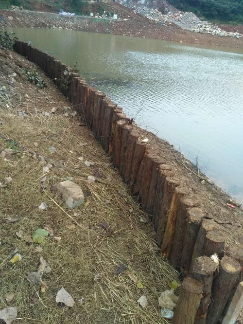 河道护坡木桩