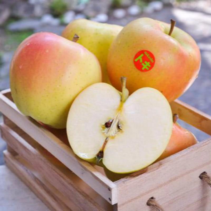 土岐水蜜桃苹果 种苗