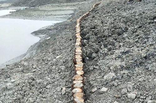 河道木樁應用