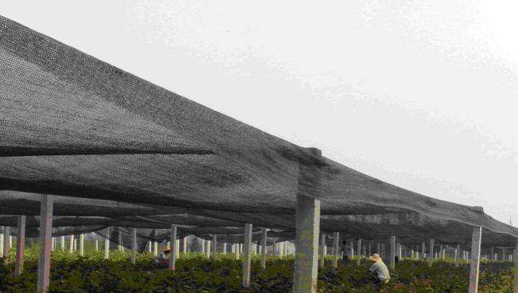 遮阳网供货商