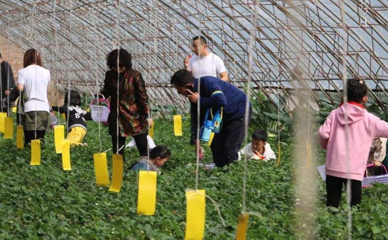 成都亲子活动家长带孩子体验农事活动