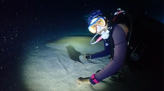 JK鲨鱼保育专长课程