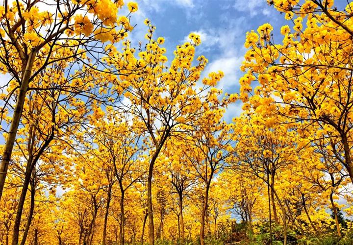 南宁狮山公园