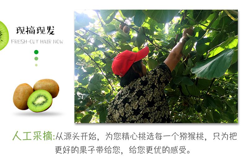 优质猕猴桃供应信息