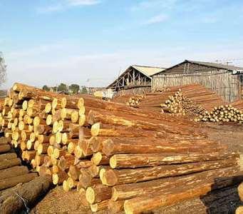 河道松木桩的使用有何好处