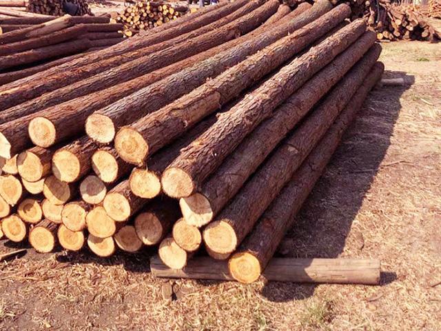 防汛杉木桩