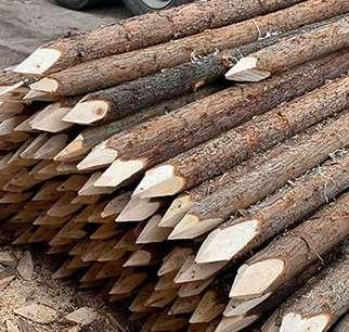 杜绝杉木桩发生问题的做法
