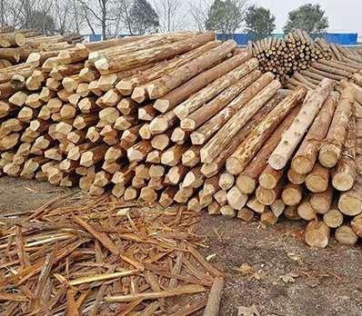 如何确保杉木桩不会受到损坏影响