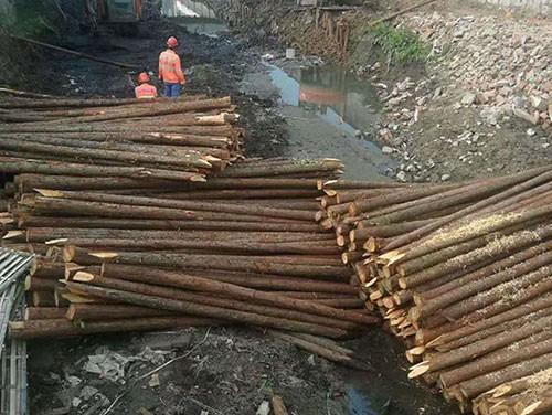 河道护坡木桩价格