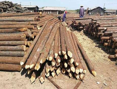 为什么杉木桩会出现损坏