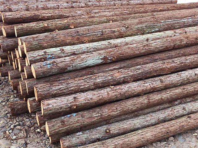 导致杉木桩使用寿命短的原因分析
