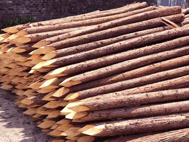 杉木桩的应用方法简介