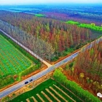 山东省临沂市召开储备林项目建设座谈会