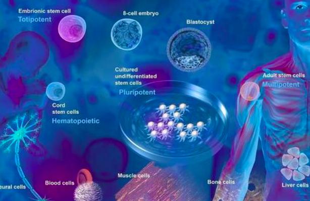 间充质干细胞的临床应用