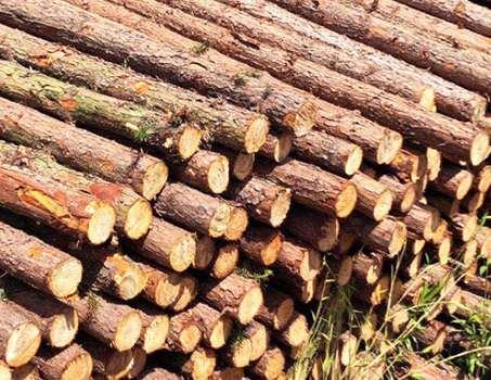 杉木桩质量的决定因素有哪些
